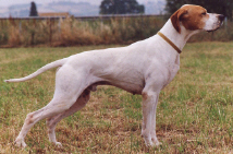 pointer small